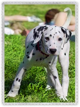 Pet Sitting Software Welcome To Bluewave Professional Pet